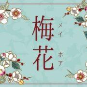 【新柄】梅花~メイホア~のすてきポイントご紹介♪